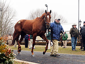 Shannon Nicole at the Fasig-Tipton Kentucky February Sale.