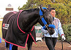 Shared Belief Returns to Track at Golden Gate