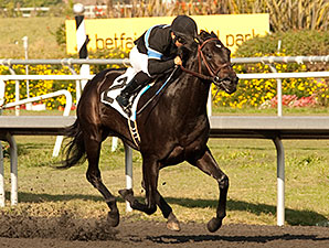 Shared Belief Entered for 3-Year-Old Debut