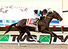 Shared Belief Heavy Choice in Awesome Again