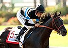 Shared Belief Drills Half Mile at Golden Gate