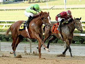Sharp Sally wins the 2013 Firecracker Stakes.