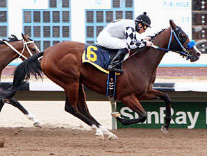 Shesatopattraction wins the 2013 Budweiser Allowance Stakes.