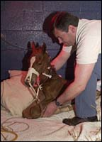 2001 Breeding Season Crisis: Many Mares Losing Foals; Links to Related Stories
