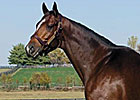 Sightseeing, Sire of So Many Ways, Dies