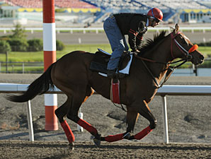 Signature Red at Woodbine, September 14, 2010.