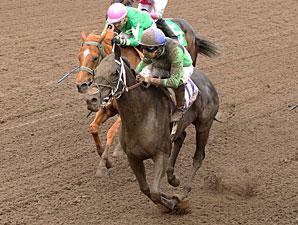 Signsealndeliver wins the 2013 Dark Star Stakes.