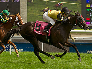 Silent Treat wins the 2014 Zadracarta Stakes.