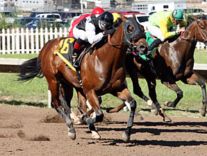 Silk Indian wins the 2013 Harvest Stakes.
