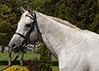 Old Friends Sets Open House for Silver Charm