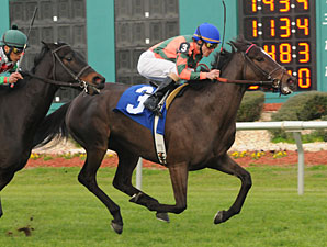 Silver Reunion wins the 2011 Endeavour.