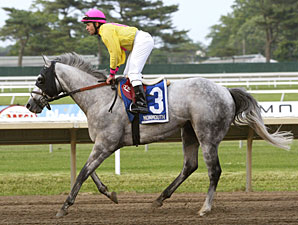 Silver Timber wins the 2010 Wolf Hill Stakes.