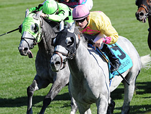 Silver Timber Repeats in Woodford