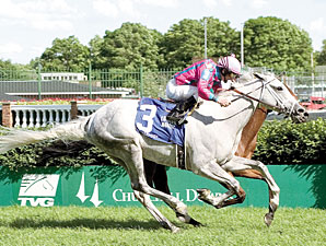Veteran Stakes Gelding Silverfoot Retired