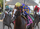 Gold Has Six in Florida Sires Stakes Series