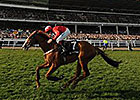 Sire de Grugy in Cheltenham 'Feel Good' Story