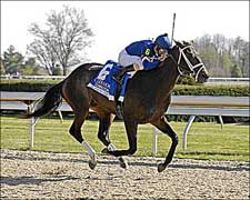 Improving Slew's Tizzy Set for Belmont