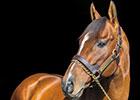 Slideshow: New Stallions of 2015