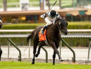 Slim Shadey Tries 12 Furlongs in San Luis Rey