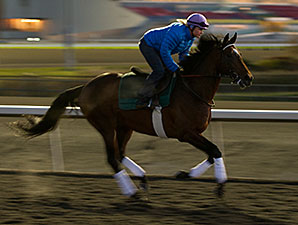Slumber works at Woodbine on 10/25/2013.