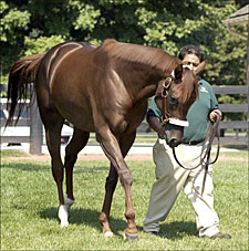 Smarty Jones Gets First Mare in Foal