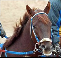Smarty Jones Puts Streak on Line in Southwest