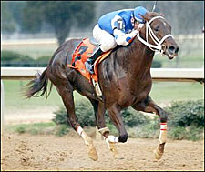 Smarty Jones Sharp Enough in Southwest Stakes