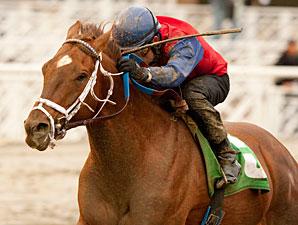 Smiling Tiger wins the 2011 San Carlos.