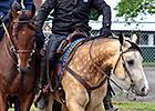 Pony Smokey a Loyal American Pharoah Sidekick