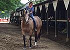 Smokey the Pony Reining at Saratoga