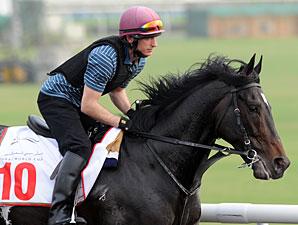 So You Think - Dubai 2012