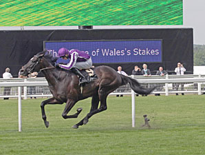 So You Think wins the 2012 Prince of Wales's.