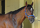Social Inclusion, Third in Preakness, Retired