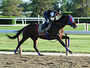 Social Inclusion - Belmont Park, May 31, 2014.