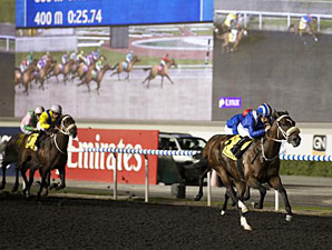 Soft Falling Rain wins the 2013 United Arab Emirates Two Thousand Guineas Trial.