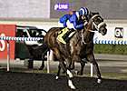 Soft Falling Rain Dominates Meydan Trial