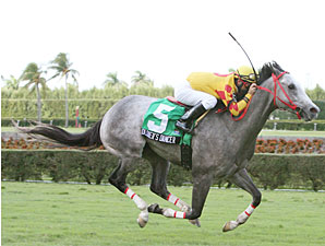 Soldier's Dancer Marches in Miami Mile