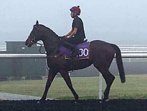 Sole Power (GB) preps at Meydan for the Al Quoz Sprint 3/6/2014.