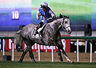 Solow All Alone in Dubai Turf