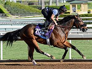Souper Colossal preps for the Breeders' Cup.