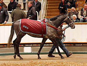 Record Median at Solid Tattersalls Sale