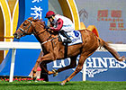 Special Fighter Wins Chengdu Dubai Cup