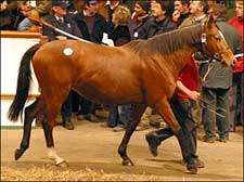 Dam of Speciosa Brings $3.8 Million at Tattersalls