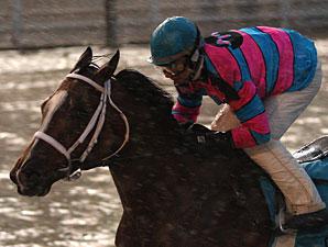 Speedacious wins the 2009 LA Champions Day Lassie.