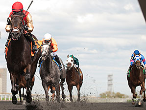 Speightsong wins the 2014 Queenston Stakes.