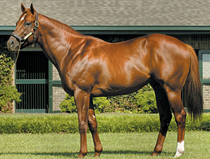 First Winner for Speightstown