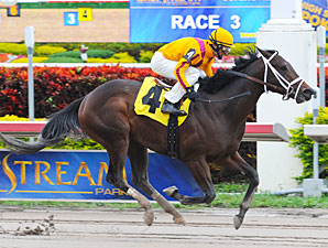 Spring Hill Farm Steps Up for Tampa Bay Derby