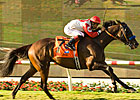 San Luis Rey Distance Fits Spring House 