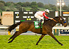 Spring House Sets Table for Dubai