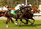 Spring Style Surprises Slim Frankel Field